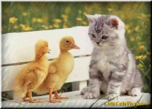 cute-kitten-baby-ducks
