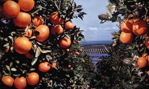fruited plain